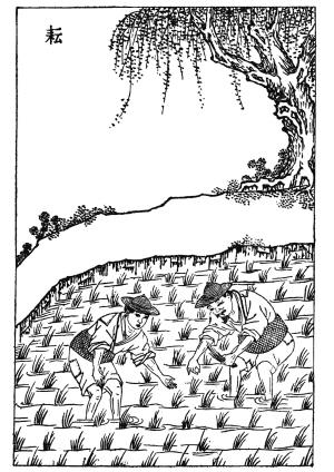 桃树风景手绘画